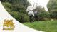 Photosynthese   #amüsgöll